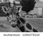 the giraffe  giraffa... | Shutterstock . vector #1340273210