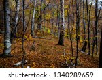 deciduous forest in cozia... | Shutterstock . vector #1340289659
