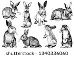 Graphical Set Of Rabbits...