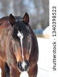 Horse Winter - Fine Art prints