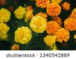 marigold flowers garland...   Shutterstock . vector #1340542889