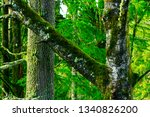 a picture of an exterior... | Shutterstock . vector #1340826200