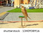hooded falcon at falcon souq... | Shutterstock . vector #1340938916