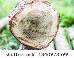 cut oak in the cut. rings of... | Shutterstock . vector #1340973599