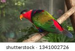 a black capped lory walks down... | Shutterstock . vector #1341002726