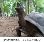 giant land turtle on prison... | Shutterstock . vector #1341149870