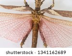 Stock photo dragonfly isolated closed up on white background 1341162689