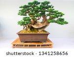 Chinese  Bonsai Tree Isolated...