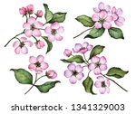 watercolor set of blossom... | Shutterstock . vector #1341329003
