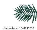tropical leaves foliage plant... | Shutterstock . vector #1341345710