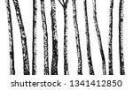 Set Of Birch Trees. Hand Drawn...