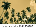 coconut palm trees   tropical... | Shutterstock . vector #1341538283