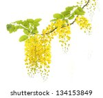 Beautiful Yellow Flower On...