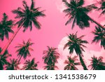 coconut palm trees   tropical... | Shutterstock . vector #1341538679
