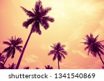 coconut palm trees in sunny day ... | Shutterstock . vector #1341540869