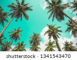 coconut palm trees in sunny day ... | Shutterstock . vector #1341543470