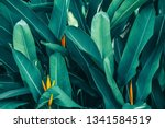 Tropical Leaf  Lush Foliage In...