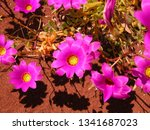 a top down view of very bright... | Shutterstock . vector #1341687023