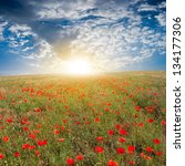 red poppy field ar the sunrise | Shutterstock . vector #134177306