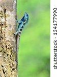 Blue Lizard  Green Lizard  Tre...
