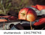 Small photo of Apple in the sunlight on a backtrack on a walking tour in the nature