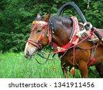 horse in russian national... | Shutterstock . vector #1341911456