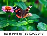 butterfly on a flower | Shutterstock . vector #1341928193