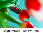 Red Orange Tulips On A...