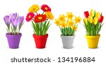 background,beautiful,beauty,blooming,blossom,bunch,close,color,colorful,crocus,daffodil,daisy,decor,decorate,decoration