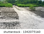 oyster farms in the sea at the... | Shutterstock . vector #1342075160