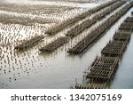 oyster farms in the sea at the... | Shutterstock . vector #1342075169