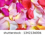 multi colored rose petals... | Shutterstock . vector #1342136006
