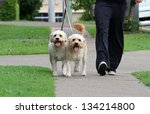Stock photo happy dogs walking outdoors on lead 134214800