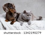 Stock photo puppy and kitten group of cat and dog 1342190279