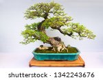 Chinese  Bonsai Tree Isolated...