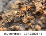 white mayfly and termites on... | Shutterstock . vector #1342283543