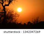 sunset with impalas   Shutterstock . vector #1342347269