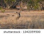 warthog in the wild   Shutterstock . vector #1342359500