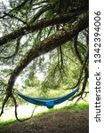 a moment of relax in a hammock...   Shutterstock . vector #1342394006