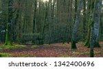 bench in forest   Shutterstock . vector #1342400696