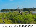 sawpit creek at big talbot...   Shutterstock . vector #1342403333