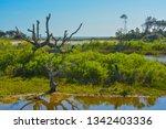 sawpit creek at big talbot...   Shutterstock . vector #1342403336