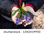 blue snowdrops on the palms of... | Shutterstock . vector #1342419950