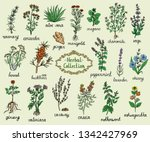 medicine herbs collection  hand ... | Shutterstock .eps vector #1342427969