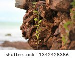 the strength of the rock by the ...   Shutterstock . vector #1342428386