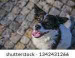 top view of a cute white and...   Shutterstock . vector #1342431266