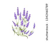bunch of lavender flowers on a... | Shutterstock .eps vector #1342460789