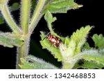 omophoita argus in nature   Shutterstock . vector #1342468853