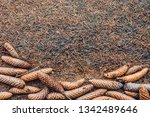 spruce needles and cones on the ...   Shutterstock . vector #1342489646