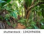 footpath in tropical rainforest.... | Shutterstock . vector #1342496006